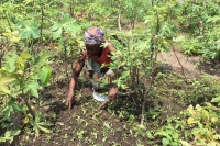Democratic Republic of the Congo - Development and food self-sufficiency: mothers as protagonists