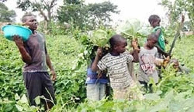 Uganda – Agricultural education for young people of Don Bosco Kampala