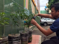 """Philippines – """"Don Bosco Pasil"""" for a Greener Campus"""